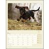 Dackel Kalender 2020