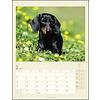 Teckel Kalender 2020