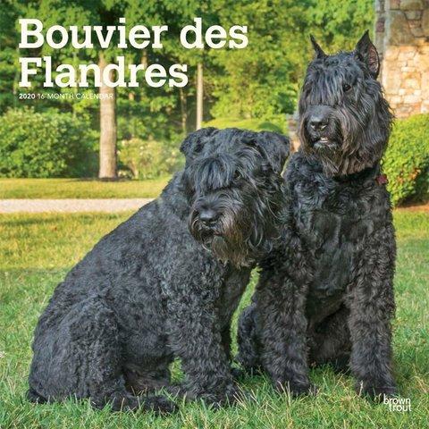 Flandrischer Treibhund Kalender 2020