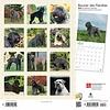 Bouvier des Flandres - Flandrischer Treibhund Kalender 2020