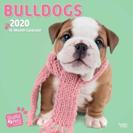 Studio Pets By Myrna Engelse Bulldog Kalender 2020