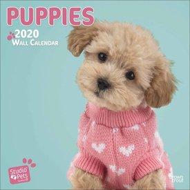 Studio Pets By Myrna Puppies Kalender 2020