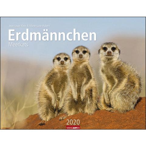 Erdmännchen Kalender 2020