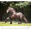 Paarden - Beloved Horses Kalender 2020