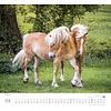 Geliebte Pferde Kalender 2020