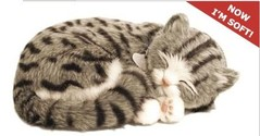 Perfect Petzzz Kätzchen