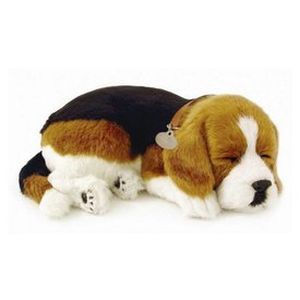 CD3 Perfect Petzzz Beagle Puppy