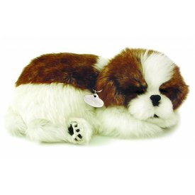 CD3 Perfect Petzzz Shih Tzu Puppie Puppy