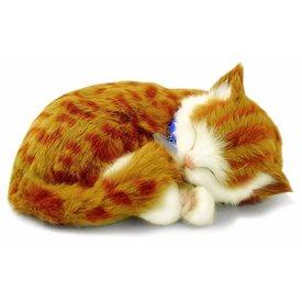 CD3 Perfect Petzzz Orange Tabby Kitten Kätzchen