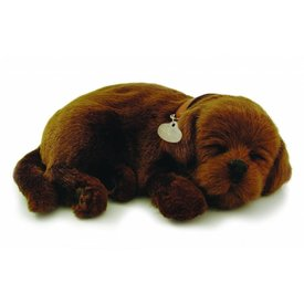 CD3 Perfect Petzzz Bruine Labrador Retriever Puppy