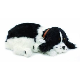 CD3 Perfect Petzzz Cocker Spaniel Puppy