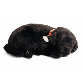 CD3 Perfect Petzzz Zwarte Labrador Retriever Puppy