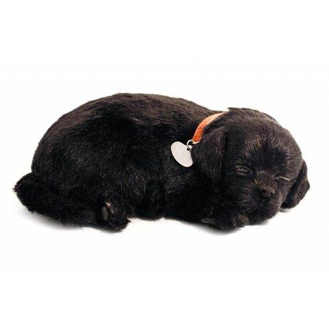 Perfect Petzzz Zwarte Labrador Retriever Puppy