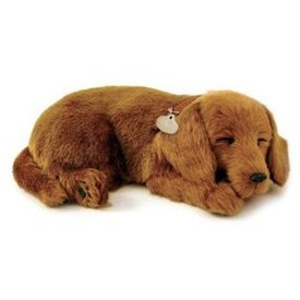 CD3 Perfect Petzzz Dachshund - Teckel Puppy