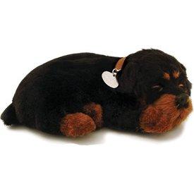 CD3 Perfect Petzzz Rottweiler Puppy Welpe
