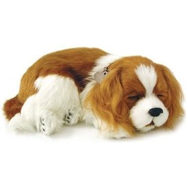 CD3 Perfect Petzzz Cavalier King Charles Spaniel Welpe