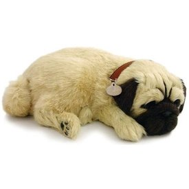 CD3 Perfect Petzzz Pug Mopshond Puppy