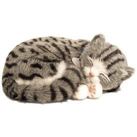 CD3 Perfect Petzzz Grey Tabby / Grijze Kitten