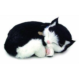 CD3 Perfect Petzzz Schwarz Weiß Kurzhaar / Schwarz Weiß Kitten