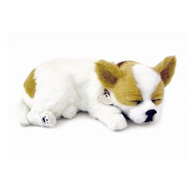 CD3 Perfect Petzzz Chihuahua Puppy Welpe