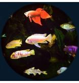 "OPTIkinetics Effectwiel groot 9"" thema:  Aquarium"