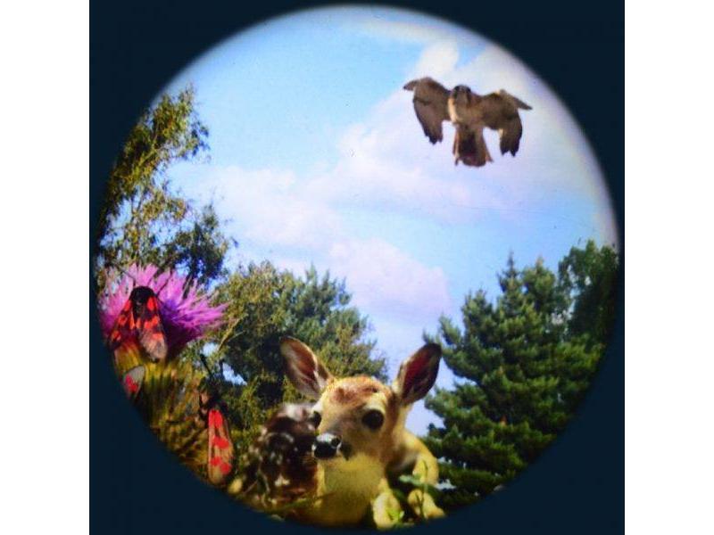 "OPTIkinetics Effectwiel groot 9"" thema: Woodland"
