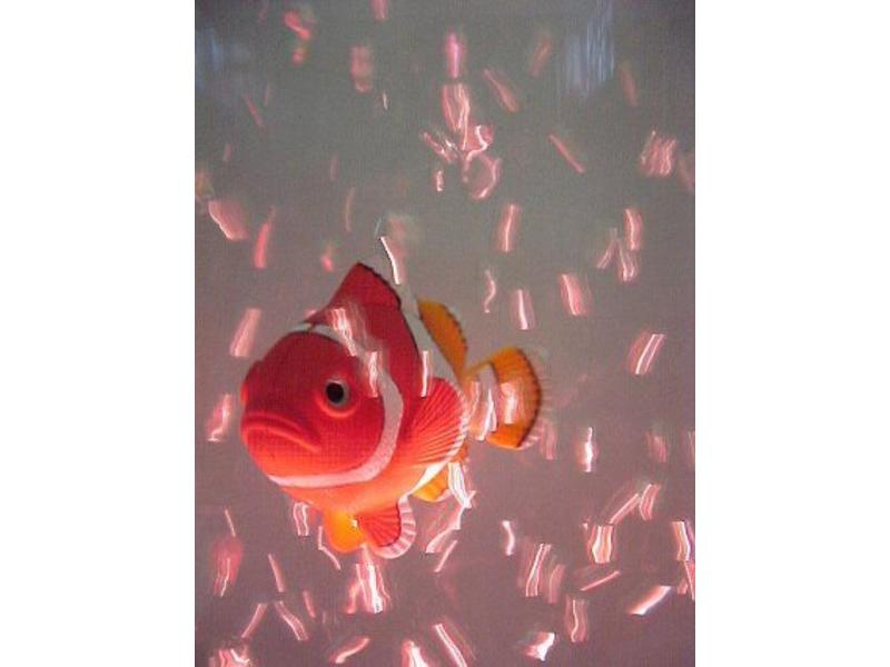 Visjes met beweegbare staart   set 5 st.