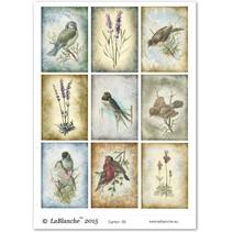 A4 Bogen, Thema: Garten