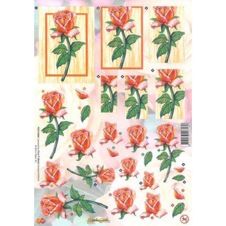 BILDER / PICTURES: Studio Light, Staf Wesenbeek, Willem Haenraets A4 feuilles coupées: roses orange