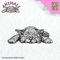 gjennomsiktig stempel: Katt