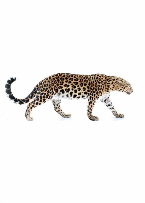 Opgezet luipaard