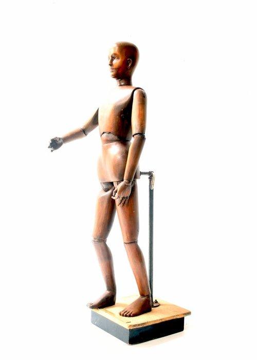 Anatomical study model 1860