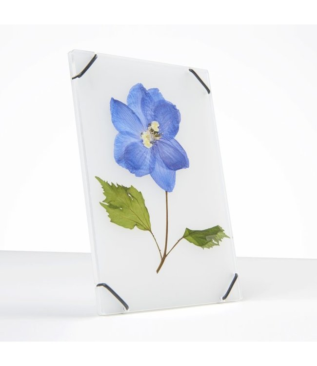 Studio Carmela Bogman Flowerframe - Ghost White - Small