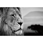 zwart-wit foto Leeuwenhoofd