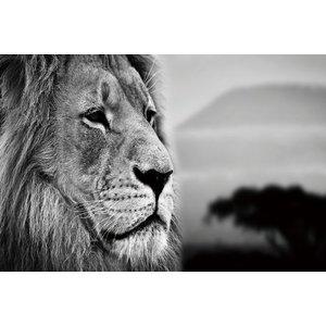 Zwart-wit foto op glas Leeuwenhoofd