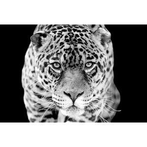 Zwart wit wanddecoratie Jaguar