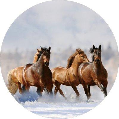 """Glazen wanddecoratie rond  """"Paarden  in de sneeuw"""""""