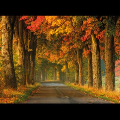 Wandkleed bochtige landweg in de herfst