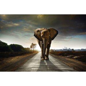"""Wanddecoratie """"olifant"""""""