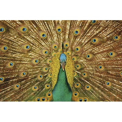 Wanddecoratie Peacock