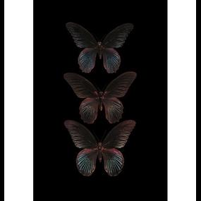Zwarte vlinders (mat)
