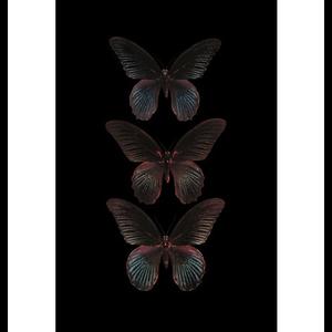 Wanddecoratie  Zwarte vlinders