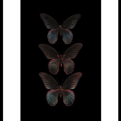 Wanddecoratie  Zwarte vlinders (mat)