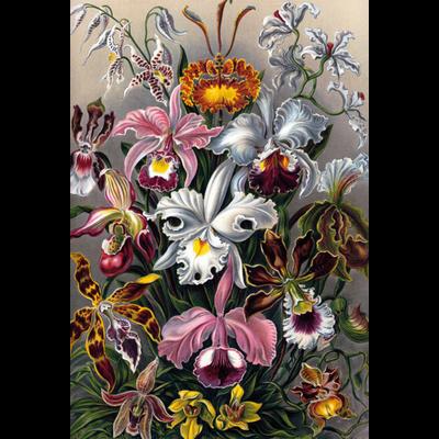Wandkleed Orchideeën