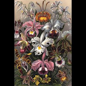 Verwisselbare kunst Orchideeën