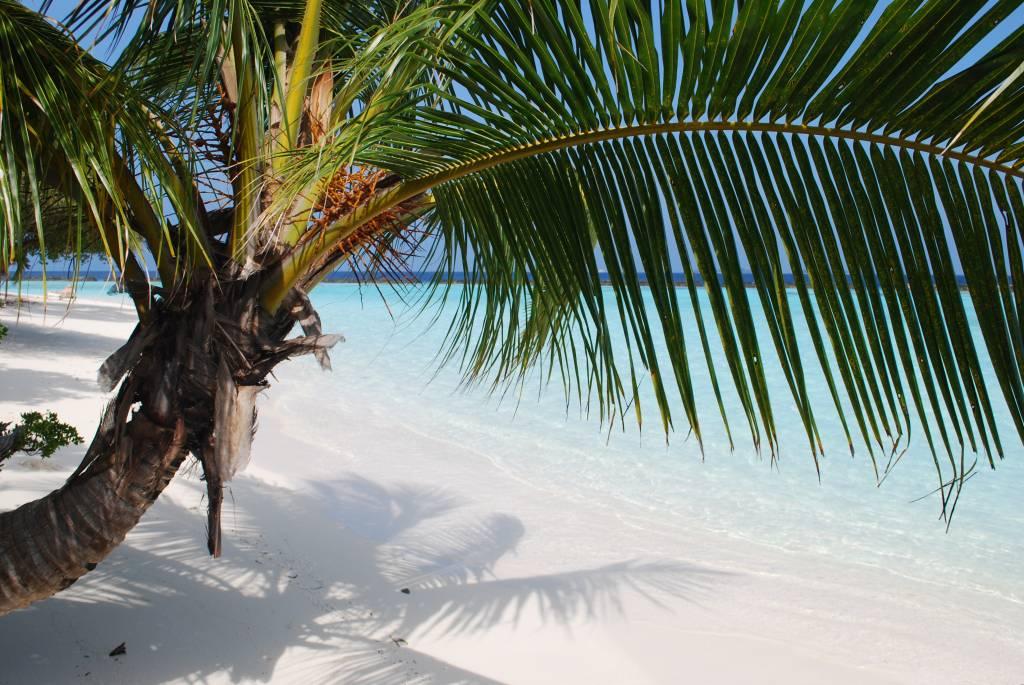 postcard palmtree 1