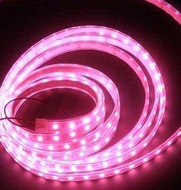 LED en Bande Étanche Rose - par 50cm