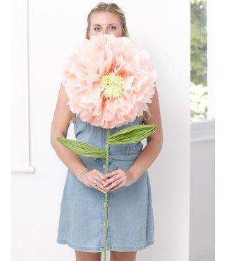 Peach Xl bloem