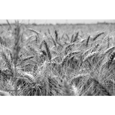 03/09/18 Tasting, In Pursuit of the Grain