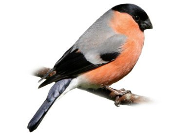 EuropäischeVögel